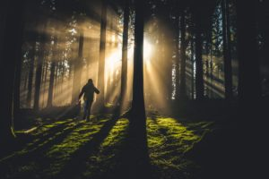 A person walking though a forest at sunrise.