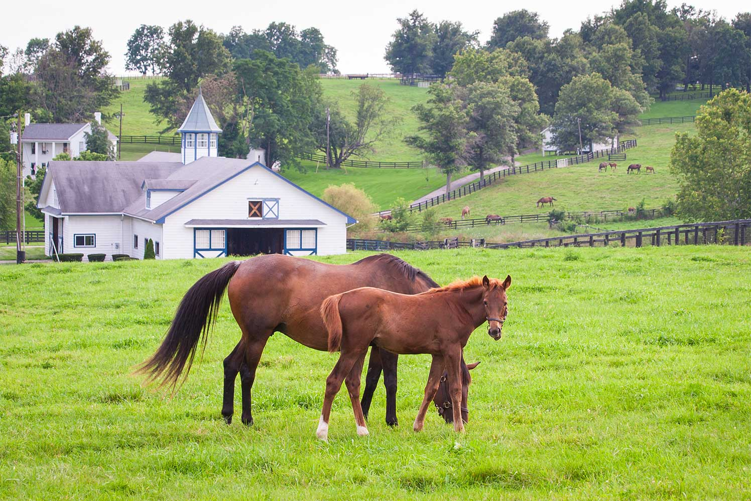 horse properties in middle tennessee