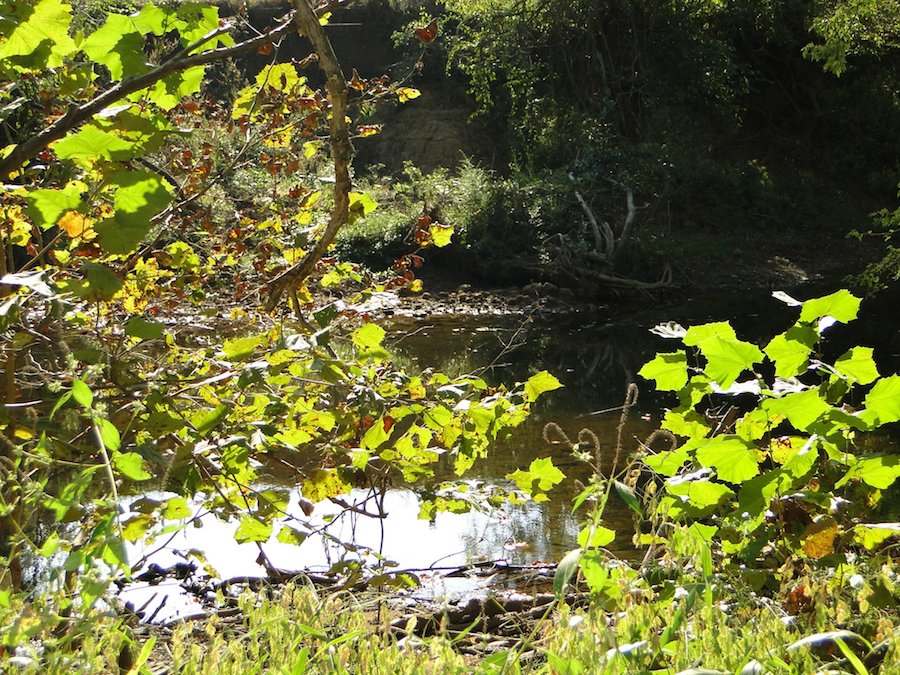 a collins river waterfront lot